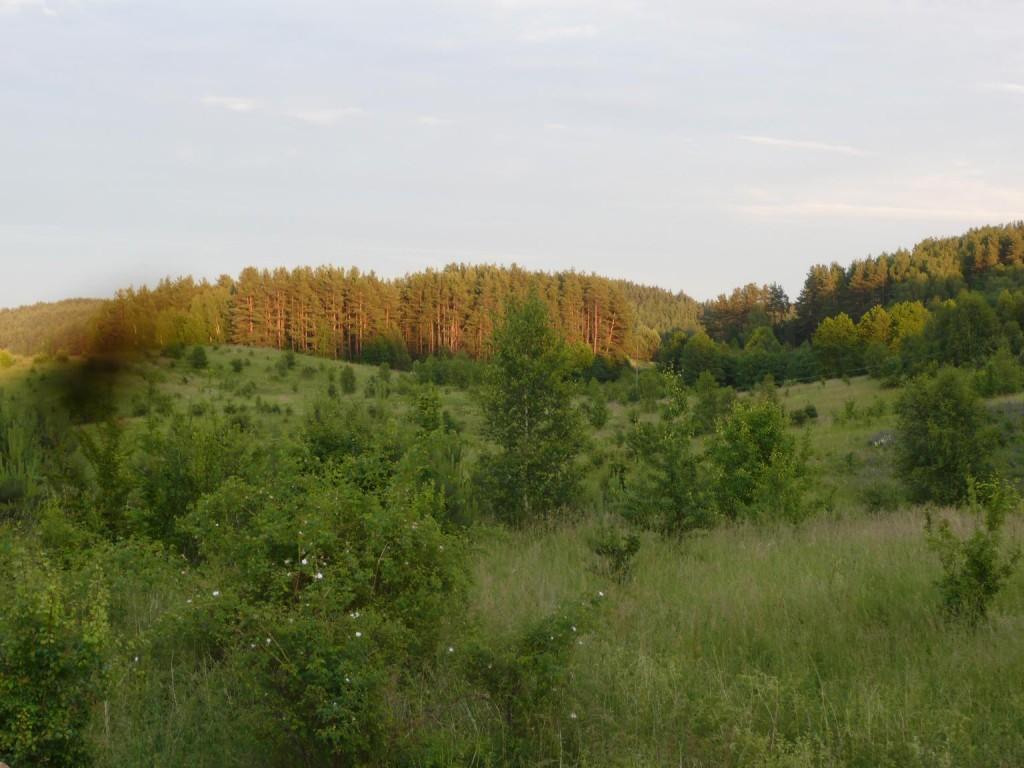krajobrazy leśne
